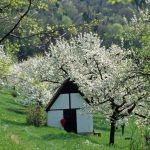 Ellenbacher Kirschgarten